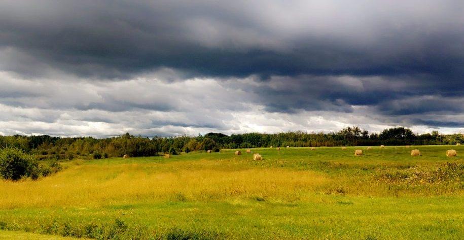 Alberta Prairies