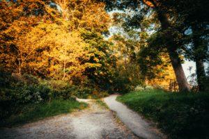 lane up to an acreage